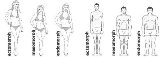 bodytypess